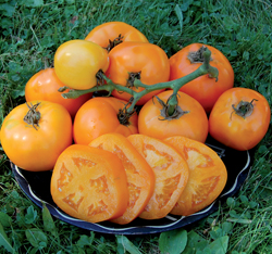Moonglow Tomato
