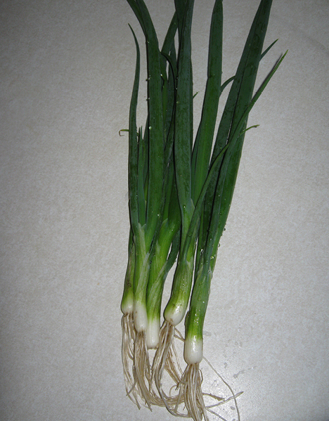 Green Bunching Onions